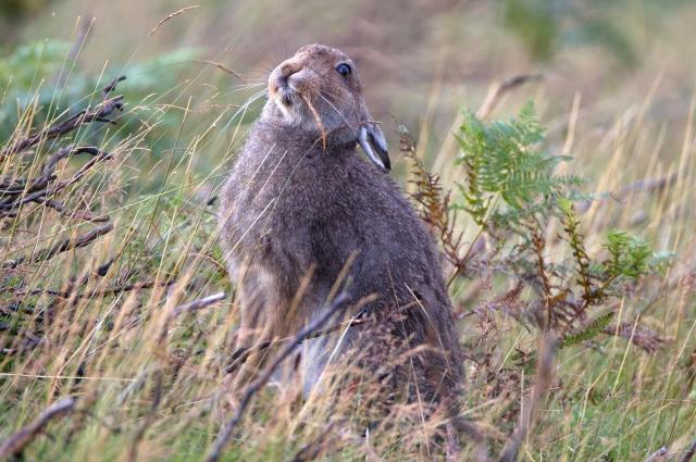 Зайчиха может накормить и своих зайчат, и чужих.