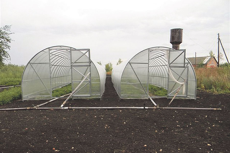 В карбонатных теплицах посадочный материал вырастает за год
