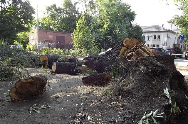 Во время сильных ветров деревья вырывает с корнем.