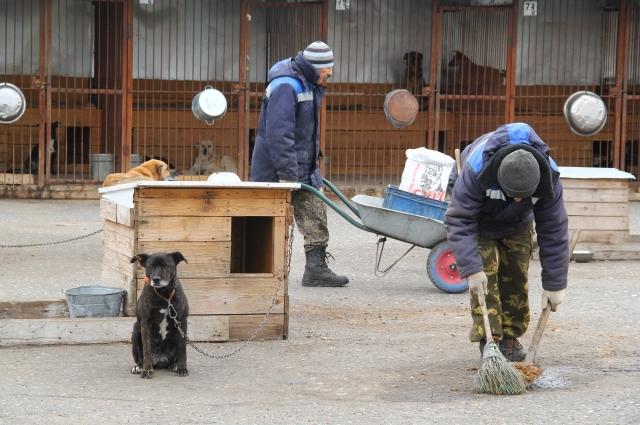 Рабочие в приюте ухаживают за собаками и регулярно кормят питомцев.