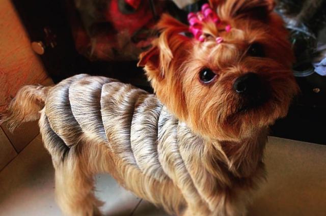 Грумеры делают собакам креативные стрижки.