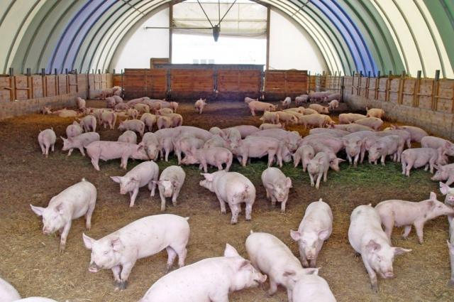 В ангаре может разместится животноводческий комплекс.