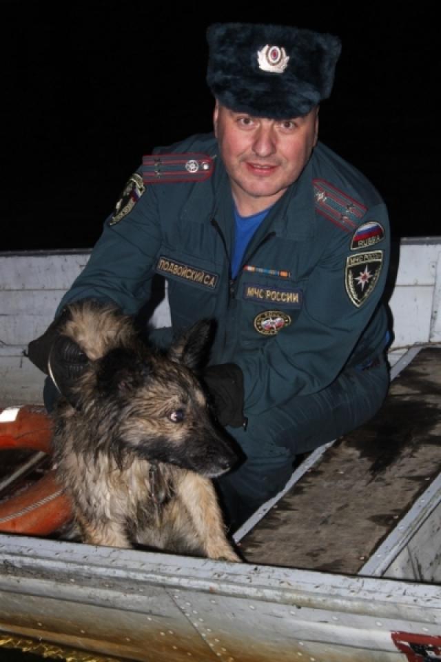 Спасателям пришлось потрудиться, чтобы пес дал себя спасти.