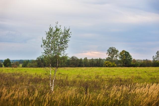 Охотхозяйство расположено в экологически чистом районе.