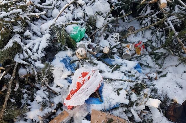 Торговцы ёлок оставили среди оставленного мусора улики.