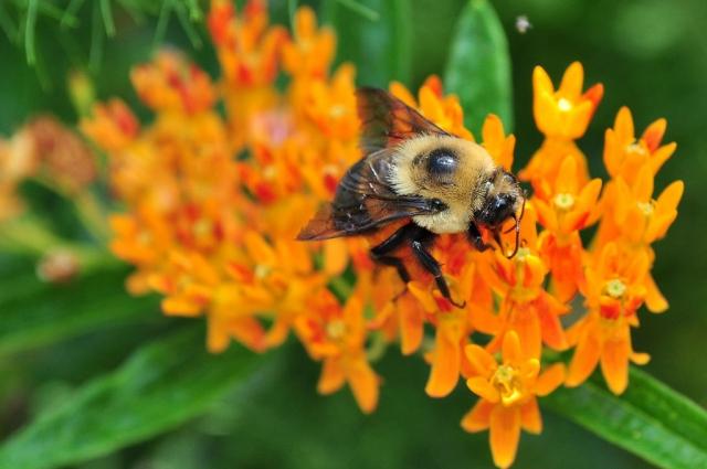 Цвет мёда зависит от медоноса – то, из чего и получается продукт.