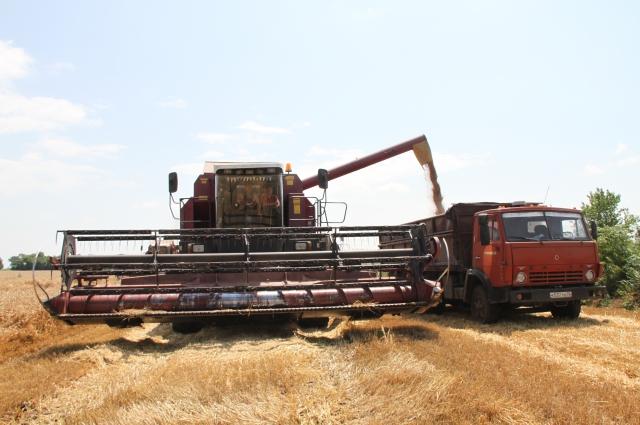 Зерна вырастили много, но счастья это фермерам не принесло.