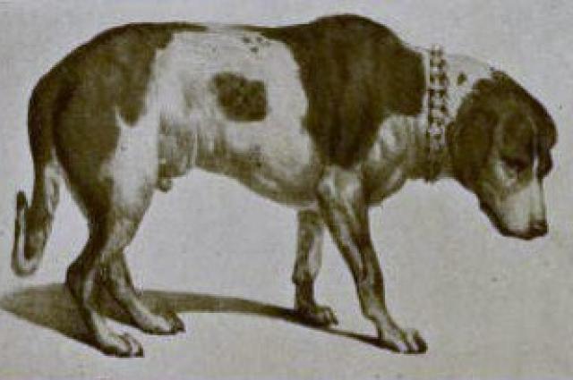 До наших дней сохранился рисунок, изображающий чучело Барри до модификации 1923 года.