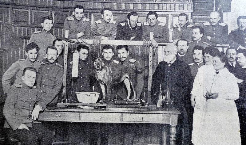 И. П. Павлов в своей лаборатории, 1913 г.