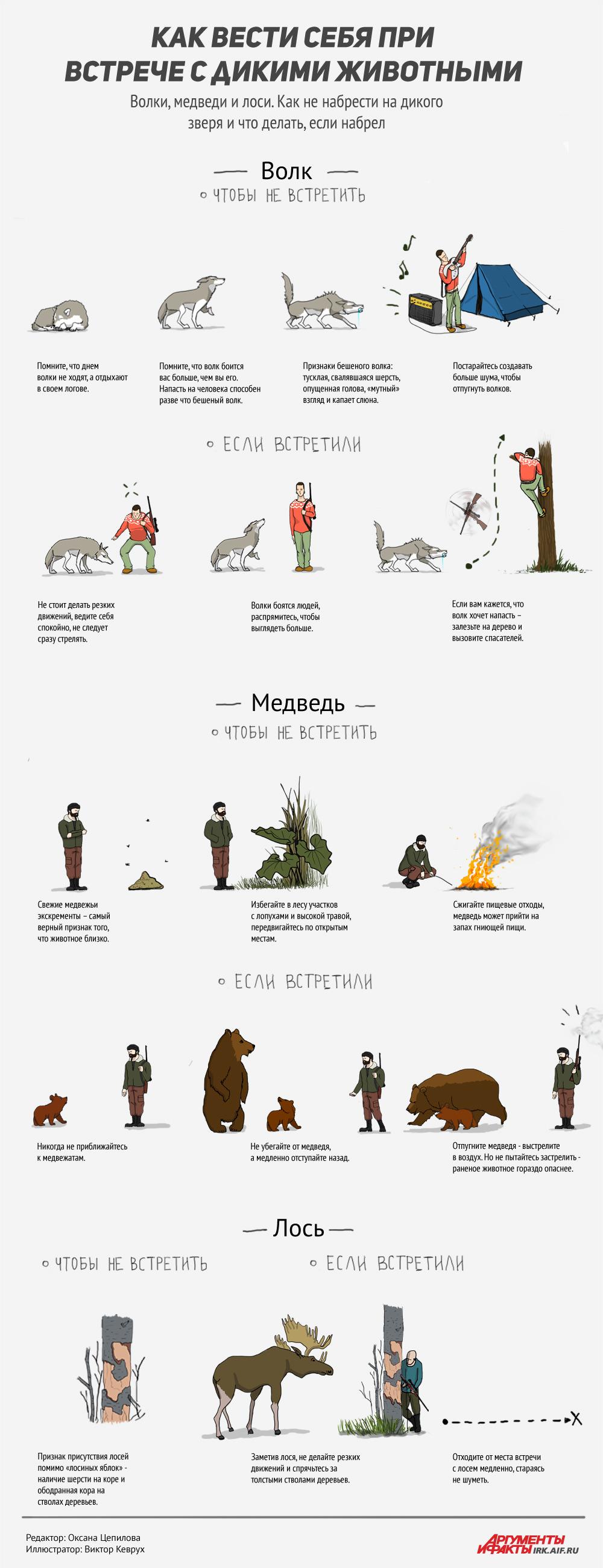Как вести себя при встрече с дикими животными. Инфографика