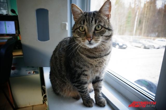 Первым гостей приёмника встречает кот Серёжа.