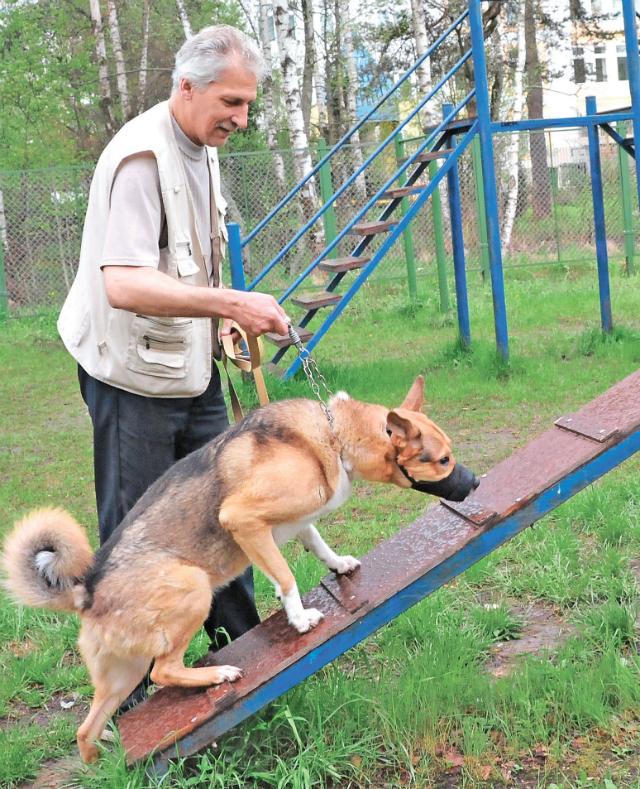 Чтобы питомец был в тонусе, ему нужны физическая нагрузка и активный образ жизни. Для этого подходят новые площадки для выгула собак.