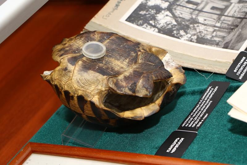 Панцирь черепахи, которой Николай Синицын пересадил сердце.