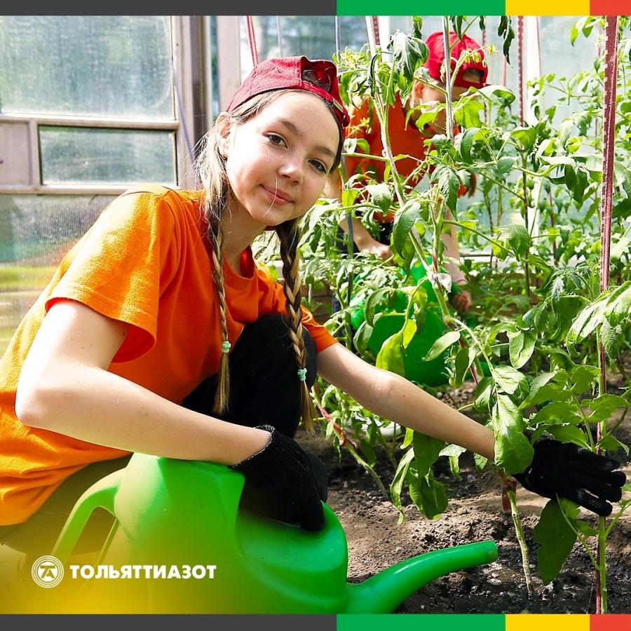 В 2020 году социальный приют для детей и подростков «Дельфин» стал одним из победителей конкурса «Химия добра». Благодаря гранту в учреждении реконструировали теплицу и дети смогли познакомиться ближе с растительным миром.