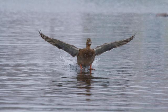 Больше всего птиц в области можно увидеть весной.