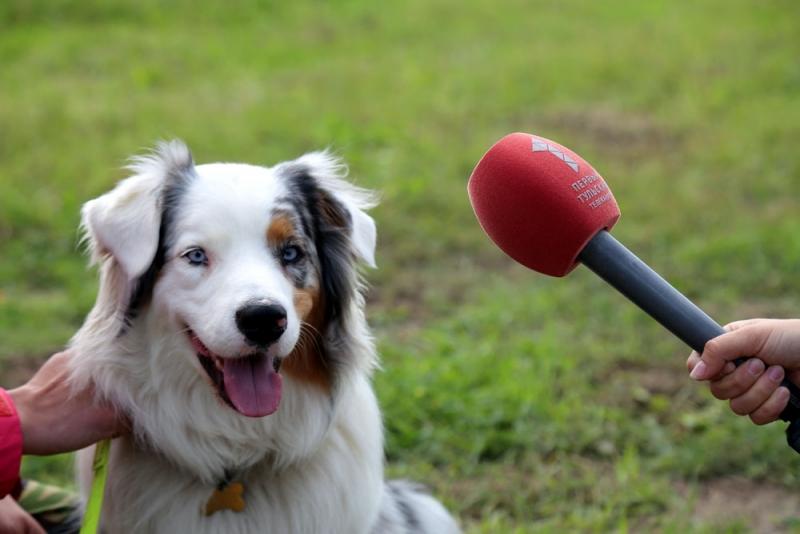 соревнования служебных собак