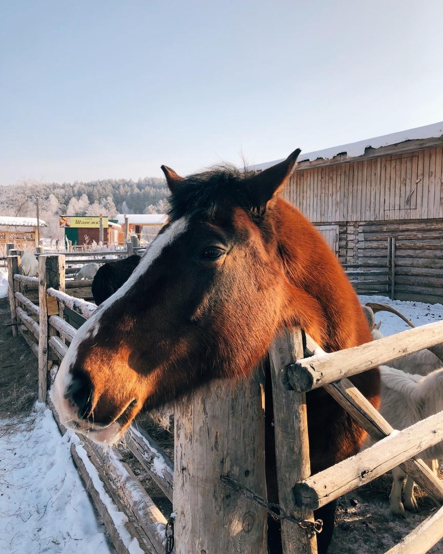 Животные очень любят внимание людей, но из-за карантина они практически не получают человеческую заботу и ласку.