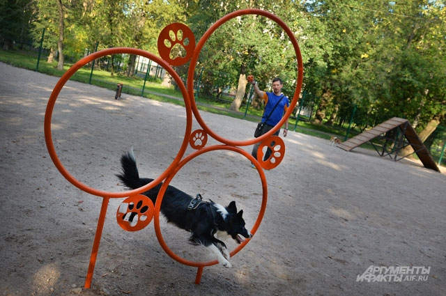 Даже у собак – свой специальный тренировочный «полигон».