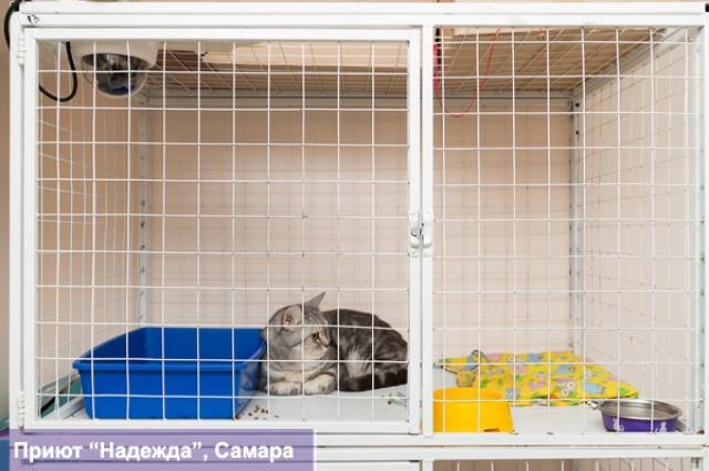 За всеми животными можно наблюдать в режиме реального времени с помощью веб-камер.
