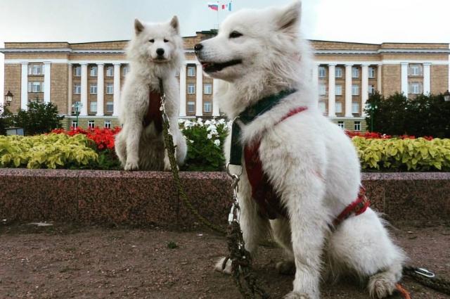 Собакам нравится путешествовать со своим хозяином.