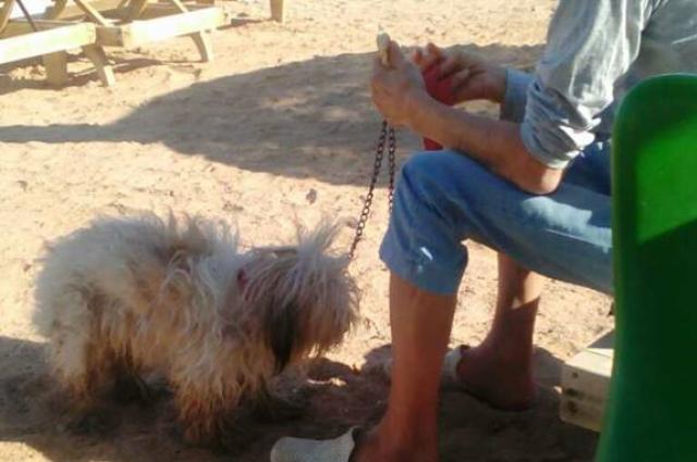 По словам внучки, пенсионер хорошо себя чувствует и гуляет на пляже со своей собакой.
