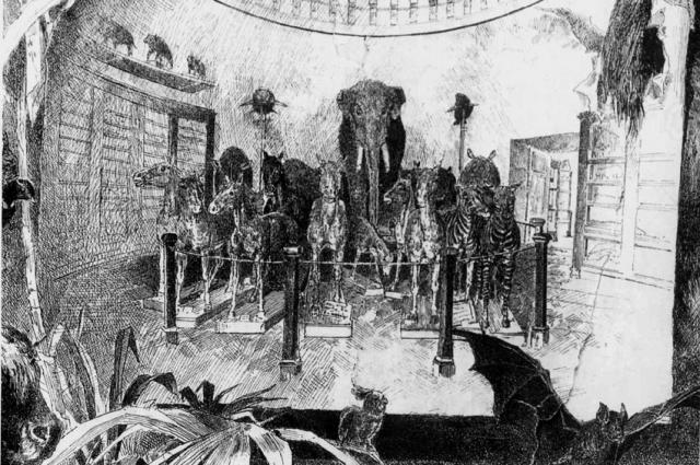 Первая коллекция Зоологического музея была создана на базе Кунсткамеры.