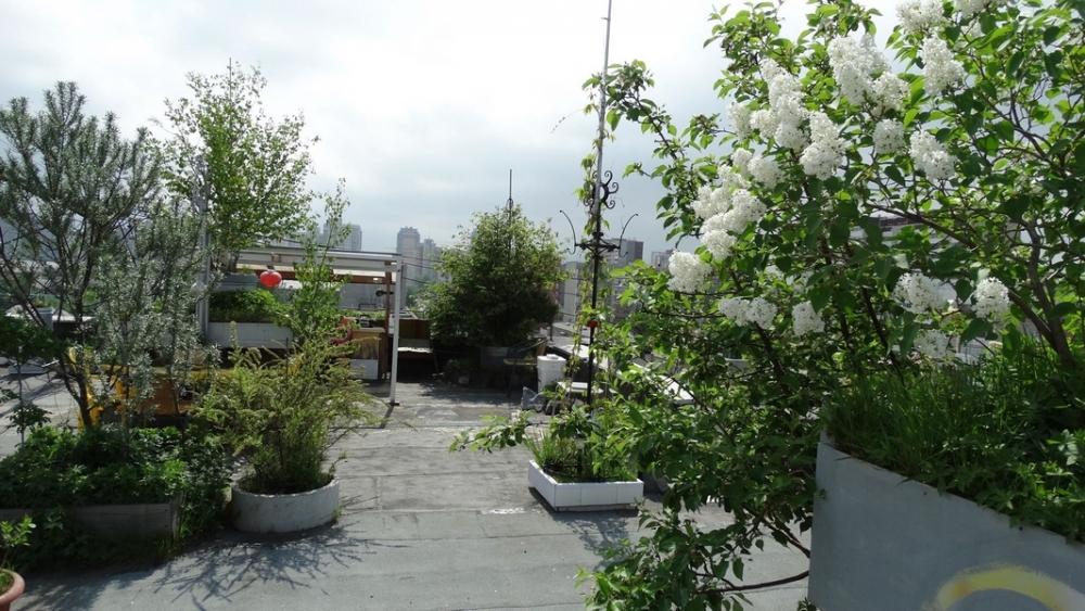 В саду на крыше росли деревья 17 пород, в том числе достаточно редкие.