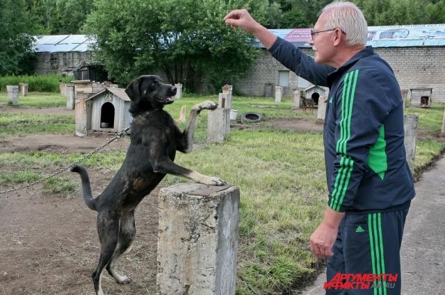 Каждой собаке нужно человеческое внимание и кусочек сахара.