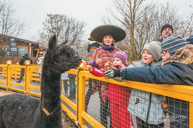 Экскурсоводы, одетые в сомбреро и яркие костюмы, находили ответы на самые неожиданные вопросы посетителей парка об альпака.