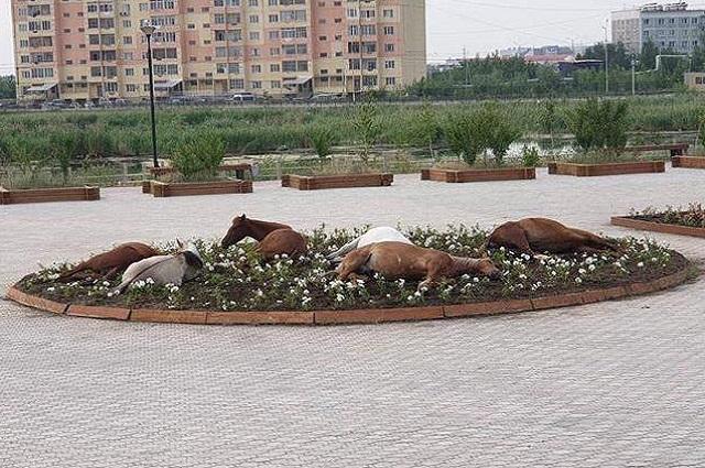 Безнадзорные лошади на клумбе.
