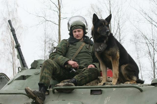 собака на танке