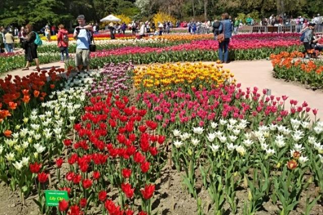 Тюльпаны в Никитском ботаническом саде