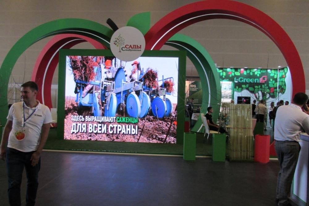 Российские питомники выращивают саженцы по международным стандартам.