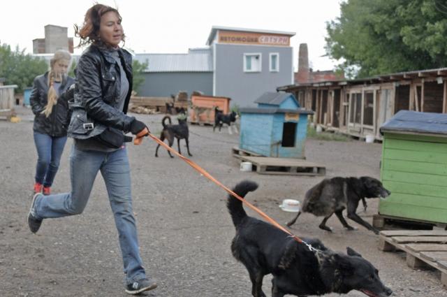 Для собак, сидящих на цепи, возможность побегать – настоящий праздник.