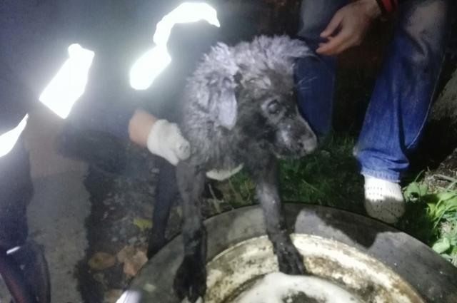 Прибывшие спасатели с помощью специнструмента вызволили собаку.