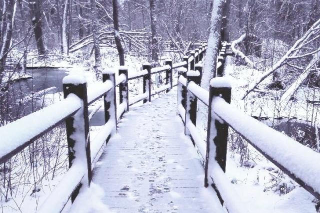 Побывав в заповеднике зимой, мы решили. что обязательно должны вернуться сюда летом.