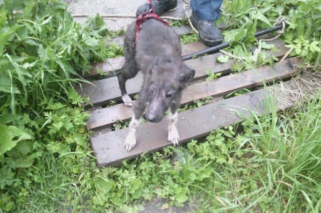 Собаку достали с помощью специального оборудования.
