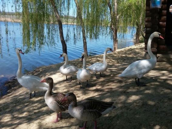 В парке обитают разные виды птиц и животных