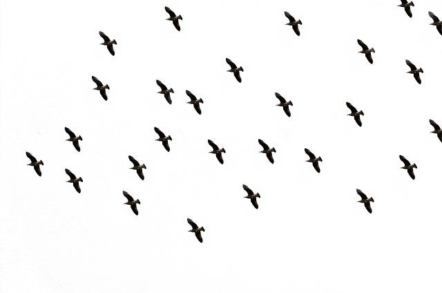 Улетающие на юг птицы.