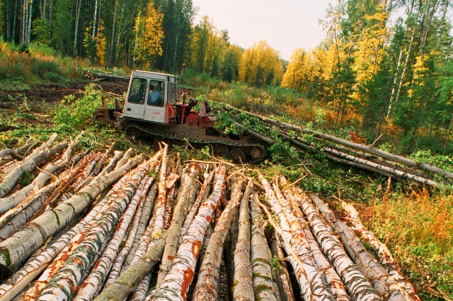 Спиливание, срубание, срезание, то есть отделение ствола от корня дерева запрещено.
