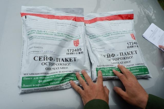 Образцы зараженных овощей упакованы, как особо важные улики.