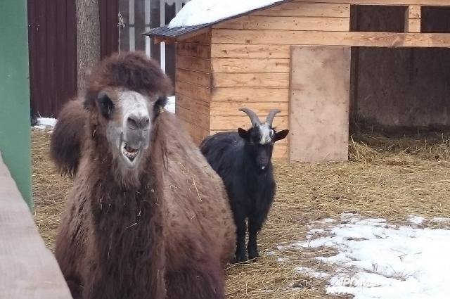 Джамаль и Ихтиандр просто соседи.