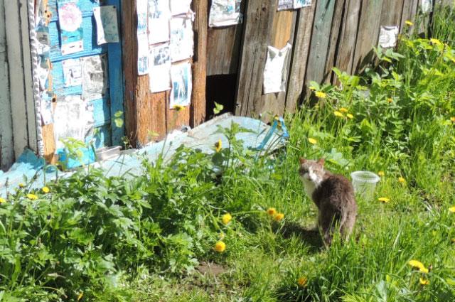 Валентин Иванович заботится о кошках.