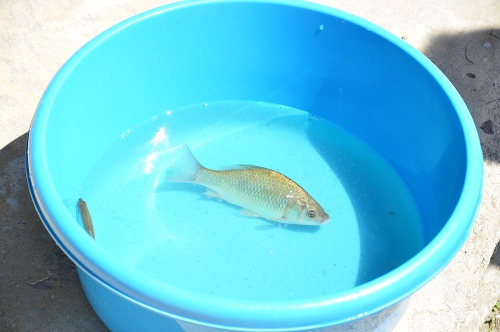 Мелкая рыбешка сама лезла на крючок