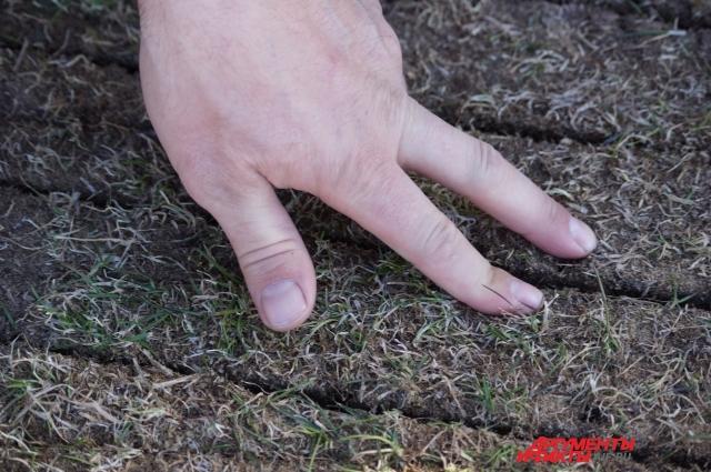 В бороздки сразу попадают семена травы для футбольного газона