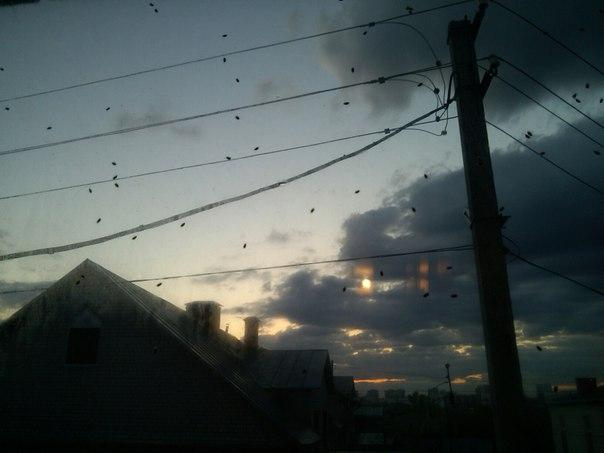 Нашествие неизвестных насекомых в Барнауле