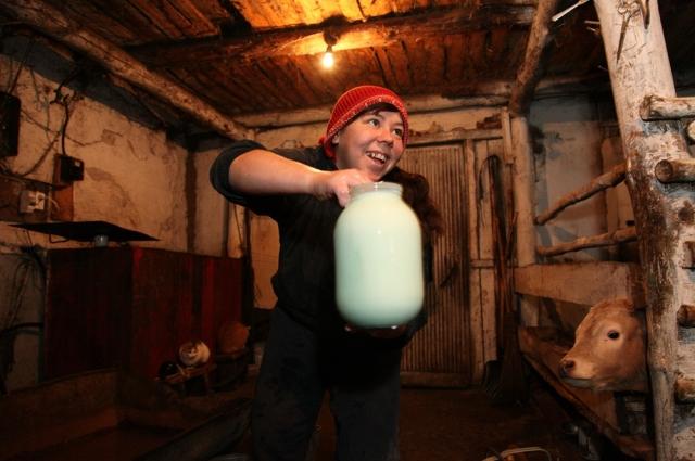 Молоко по осени прибавляет в цене