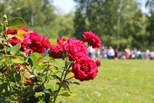 Сейчас гости Дня поэзии радуются переносу праздника с дождливого октября на солнечный июль.