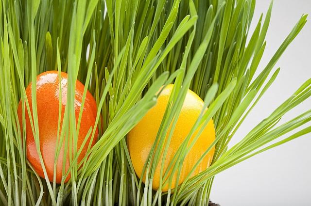 Символы праздника - первая прорсшая трава и крашенные в жёлтые оттенки яйца.