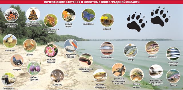 Исчезающие растение и животные Волгоградской области